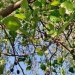 Siebengebirge nature, arbres, aulne
