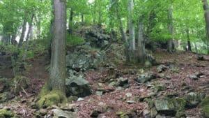 Forêts sur éboulis, Lohrberg