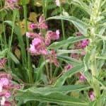Siebengebirge nature, fleurs, compagnon rouge