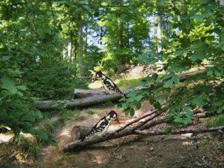 Siebengebirge nature sauvage