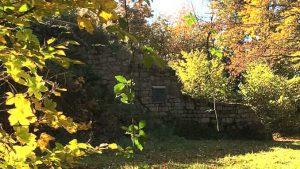 Château fort Rosenau, hêtres et sycomores