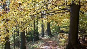 Löwenburg, forêt en automne